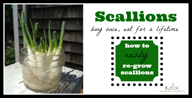 Scallions: Buy Once, Eat For a Lifetime {How To Re-Grow Scallions}   www.mixwellness.com