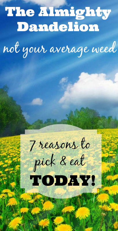 The Almighty Dandelion Not Your Average Weed + 7 Reasons to Pick & Eat Them TODAY! | www.mixwellness.com