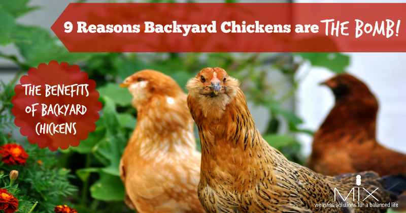 The benefits of backyard #chickens for your home & #health